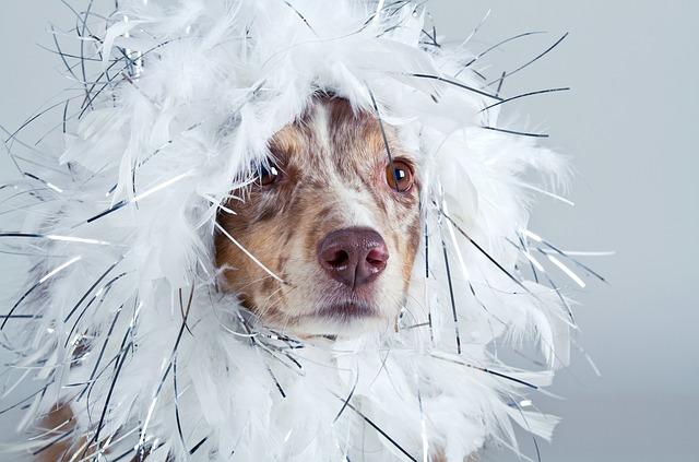dog-1272834_640